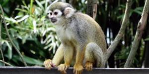 Monkey pose blog header