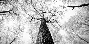 tree B&W image