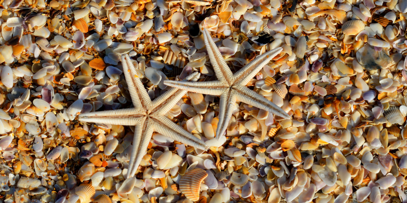 starfish shells beach