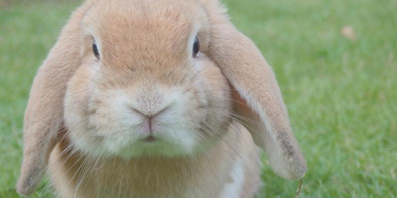 Cute bunny nose