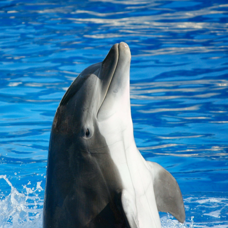 Dolphin photo