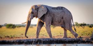 Elephant pose photo
